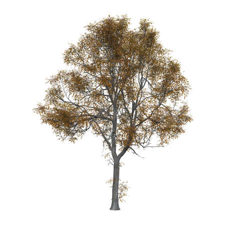 Golden tree photorealistic 3D illustration, isolated on the white background.