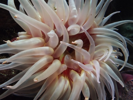 Ocean Plant