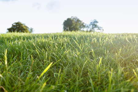 Fresh green grass Stock Photo