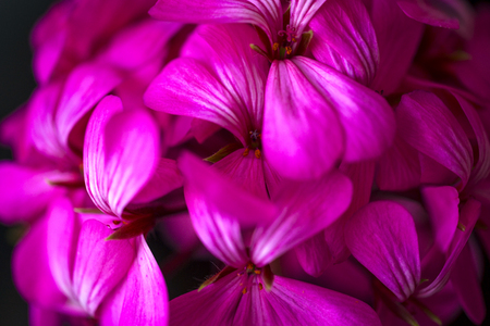 Beautiful fairy dreamy magic pink purple flowers on faded blurry background