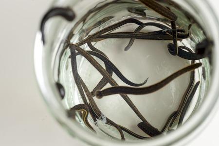 Hirudotherapy. Medical leeches Stock fotó - 83000102