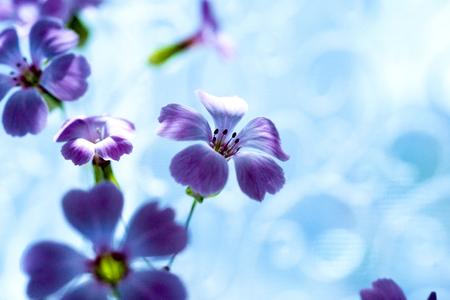 Daisy flower against blue sky,Shallow Dof. spring flowers Reklamní fotografie