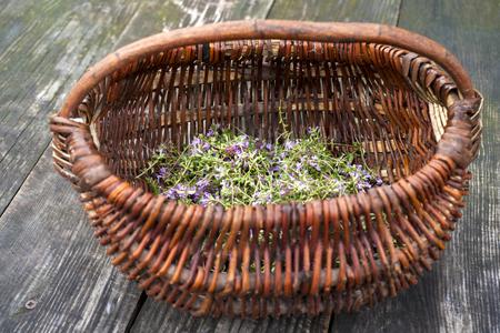 Alternative Medicine.Thyme and medical ampoules. Essential oils Reklamní fotografie