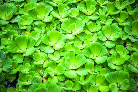 Green grass background. Backyard for background. Green lawn desktop picture 写真素材 - 130718565