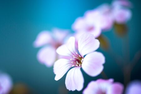 Daisy flower against blue sky,Shallow Dof. spring flowers 写真素材