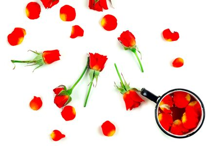 red roses on a white background 写真素材