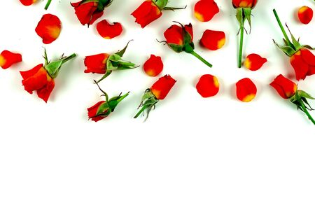 red roses on a white background 写真素材 - 136970252