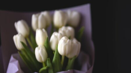 spring flowers banner - bunch of white tulip flowers on bright colorful background. spring flowers