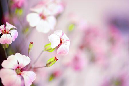 Daisy flower against blue sky,Shallow Dof. spring flowers. Floral background Reklamní fotografie