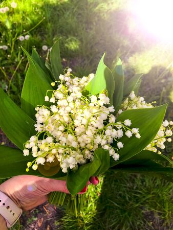 Beautiful white lilies of the valley in hand in the green spring sunny forest day. Spring, april, may, nature, beautiful plants