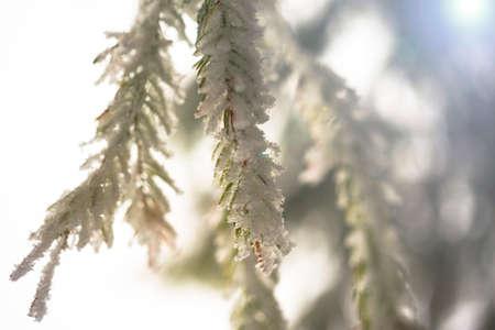 Fir branch on snow. Winter mood. Soon the New Year Reklamní fotografie
