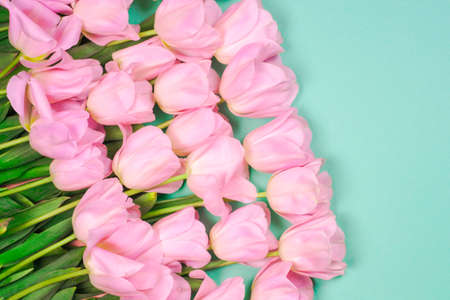 spring flowers banner - bunch of pink tulip flowersbright colorful background.