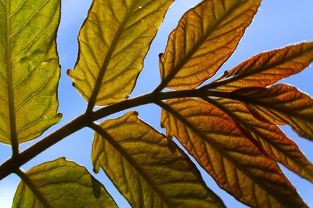 Leaves on blue Stock Photo - 4950996