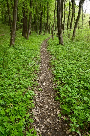 Footpath in forest photo