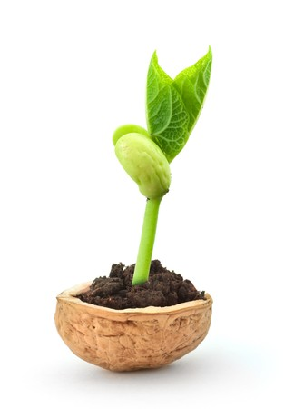 nutshell: Small plant in a nutshell