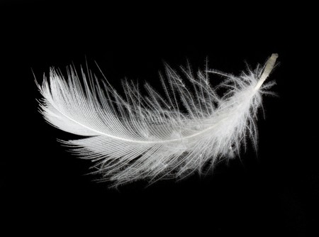 plume blanche: Plumes blanches isol� sur fond blanc Banque d'images