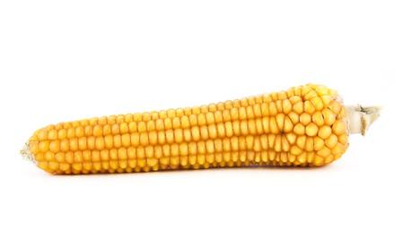 Golden corn isolated on white background photo