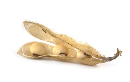 Gousses de soja isolées sur fond blanc