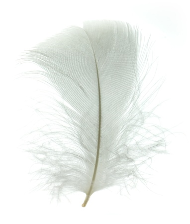 falling feather: White goose feather isolated on white background Stock Photo