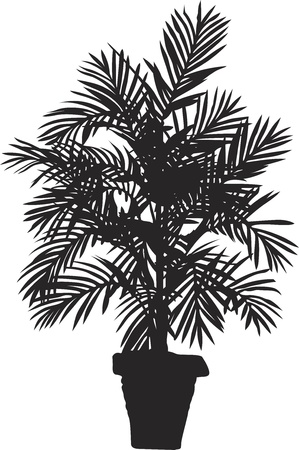 cocos: Palm tree silhouetter. Vector illustration