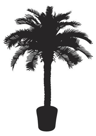 Palm tree silhouetter. Vector illustration Vector