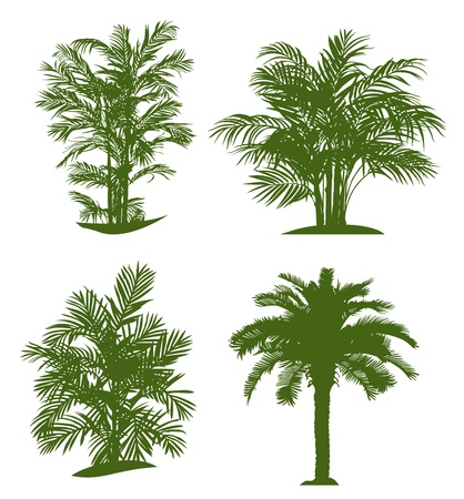 Palm tree silhouettes. Vector illustration Çizim