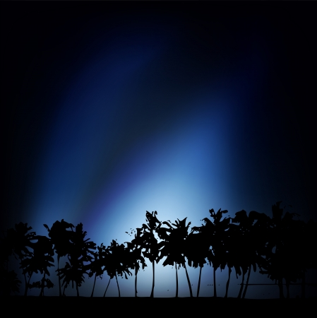 Silhouette of palm trees against a background of dark sky Vector