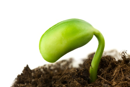 Small plant of soy on a white background