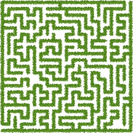 Green maze Illustration