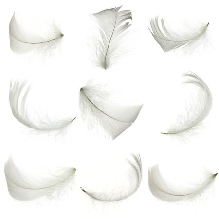 piuma bianca: Set di piuma bianca, isolata Archivio Fotografico