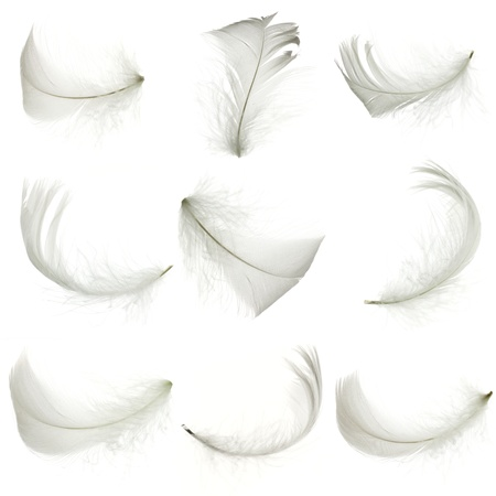 Set of white feather, isolated  Stock Photo