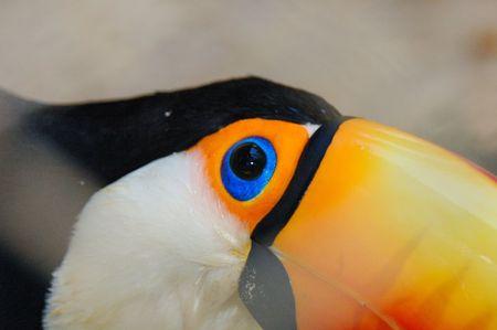 glance: Toucan glance