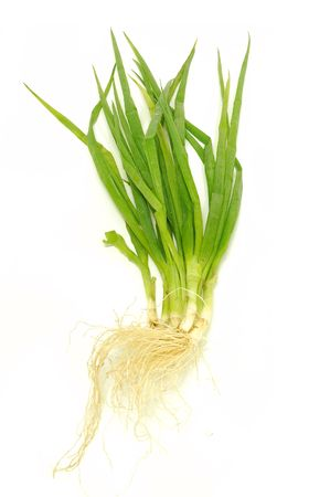 the caustic: Green Onion