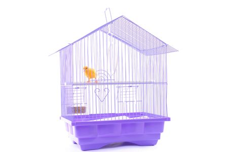 beack: Yellow Canary in the Cage over white .