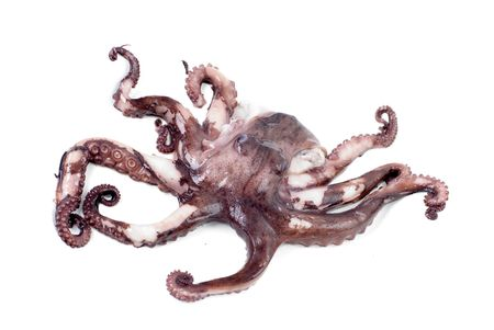 octopus: pulpo dispar� m�s de fondo blanco. Foto de archivo
