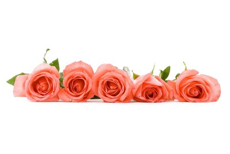 Five pink roses on white background .