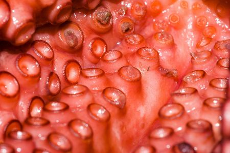 seafruit: Sea Fruits background - Raw Octopus  .