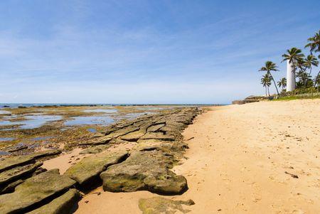 forte: Praia do Forte - Bahia - Northeast of Brazil .