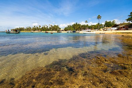 praia: Praia do Forte - Bahia - Northeast of Brazil .