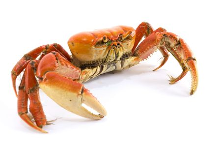 clean dishes: Animal Crab - delicious sea fruit food .