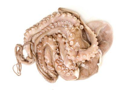 seafruit: Octopus sea fruit. Studio shot of,