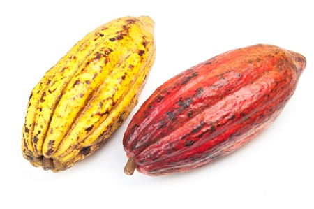 cocoa beans: Cocoa - raw fruit to making chocolate Stock Photo