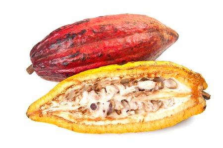 Cocoa - rohes Obst auf die Herstellung von Schokolade Standard-Bild - 10311749