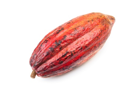 Cocoa - raw fruit to making chocolate photo