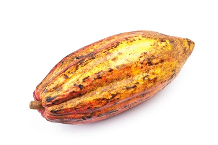 Kakao - rohe Frucht, dass Schokolade