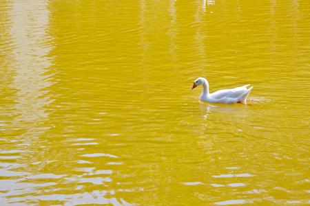 farme: Bird head looking at the lake