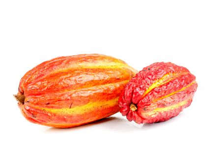 cocoa fruit: Cocoa fruit over white background .