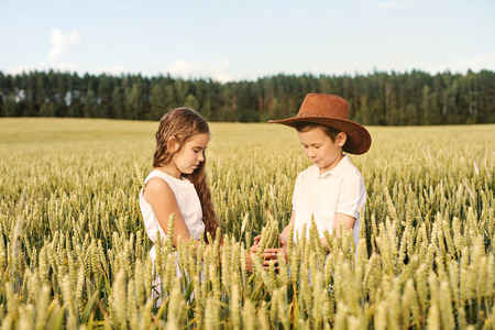 two children boy and girl examine ears of corn on a wheat field