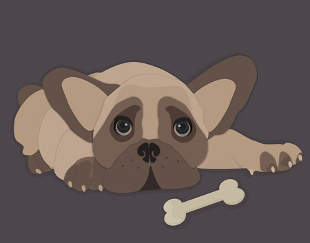 french bulldog: Close-up of a French Bulldog, isolated vector illustration Illustration