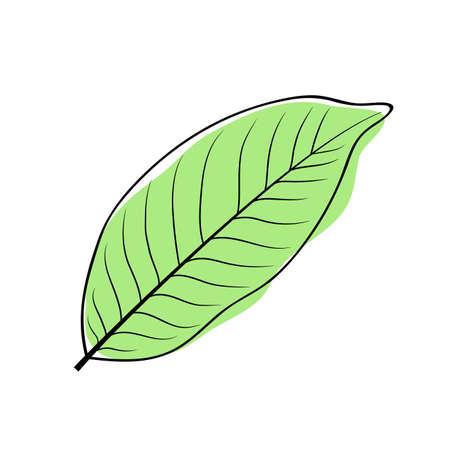 Green bay leaf. Vector laurel leaf icon